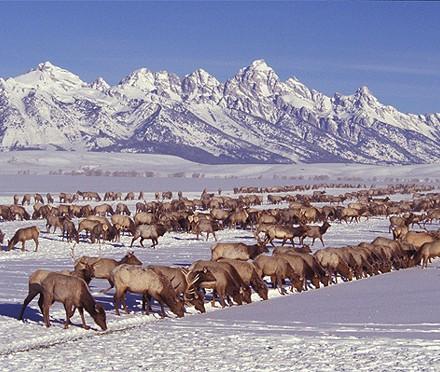 29 National Elk Refuge, WY