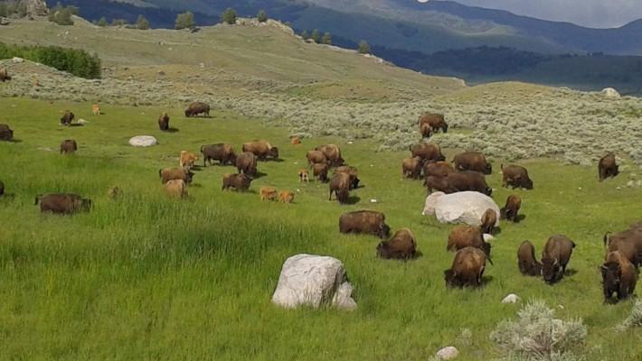 23 Yellowstone National Park