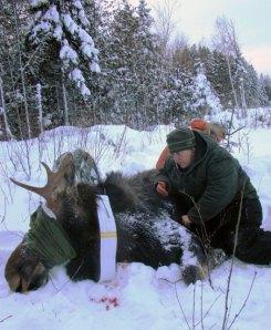 19 Moose, MN